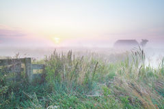 Niederländisches nebeliges Ackerland bei Sonnenaufgang Stockfotografie