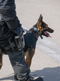 Niederländisches SWAT-Team-Mitglied und -hund in der Aktion Stockfotos