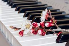 Niederlassung der Aprikose mit Blumen auf den Klavierschlüsseln Die Melodie von spring_ stockfotografie