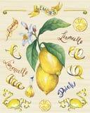 Niederlassung der frischen Zitrusfruchtzitrone mit Grünblättern und -blumen Stockfotos