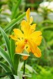 Niederlassung der gelben Orchideenblume Stockfotos
