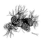 Niederlassung der Kiefer mit Kegel Hand gezeichnetes Bild stockbilder