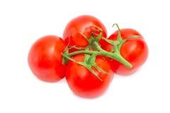 Niederlassung der reifen roten Tomatennahaufnahme Stockfotografie