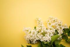 Niederlassung der weißen Flieder auf einem gelben Hintergrund minimalismus stockfoto