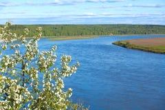 Niederlassung des Apfels blüht auf einem Hintergrund des Flusses Stockfoto