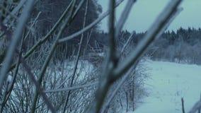 Niederlassung des Baums im Wald bedeckt mit Eis und Schnee stock footage