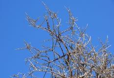 Niederlassung des Baums kein Blatt im Herbst Stockfotografie