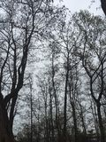 Niederlassung des Baums zum Himmel Stockfotos