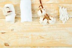 Niederlassung des Baumwollstrauches, ohrige Stöcke, Baumwollauflagen stockbilder