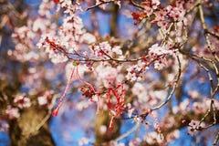 Niederlassung des bl?henden Kirschbaums mit rotem und wei?em martisor lizenzfreie stockfotografie
