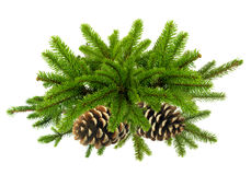 Niederlassung des grünen Weihnachtsbaums mit den Kegeln lokalisiert auf Weiß Lizenzfreie Stockbilder