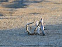 Niederlassung des Holzes auf dem Sand Stockfoto