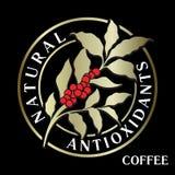 Niederlassung des Kaffeebaums mit Blättern, Blumen und Kaffeebohnen flo lizenzfreie abbildung