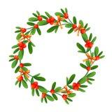 Niederlassung des Mistelzweiges mit Beeren und rotem Bogen Ein Blumenstrauß von Weihnachten vektor abbildung