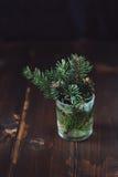 Niederlassung des Tannenbaums in einem Wasserglas Stockfotografie