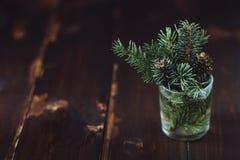 Niederlassung des Tannenbaums in einem Wasserglas Lizenzfreie Stockfotos