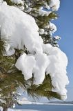 Niederlassung des Tannenbaums mit einer Schneekappe Lizenzfreie Stockfotografie