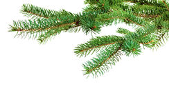 Niederlassung des Weihnachtsbaums Lizenzfreies Stockbild