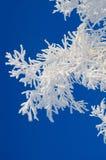 Niederlassung eines Baums im Frost Stockfotos