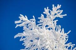Niederlassung eines Baums im Frost Lizenzfreies Stockfoto