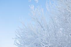 Niederlassung eines Baums im Frost Stockbilder