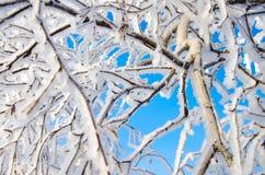 Niederlassung eines Baums im Frost Stockfoto