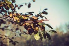 Niederlassung eines Baums im Herbst Stockfotografie