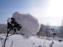 Niederlassung eines Baums vor dem hintergrund einer Winterlandschaft Stockbilder