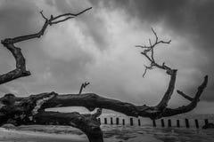 Niederlassung eines großen blattlosen Baums lizenzfreie stockfotos