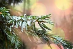 Niederlassung eines Tannenbaums bedeckt mit Schnee Lizenzfreies Stockfoto