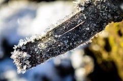 Niederlassung gewachsen mit Eiskristallen Stockbild
