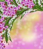 Niederlassung von blühenden Orchideenblumen Lizenzfreie Stockfotos