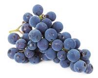 Niederlassung von blauen Trauben auf weißem Hintergrund Lizenzfreie Stockbilder