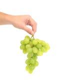 Niederlassung von grünen reifen Trauben in der Hand. Lizenzfreie Stockbilder