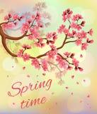 Niederlassung von Kirschblüten und von Fallblumenblättern Lizenzfreie Stockfotos