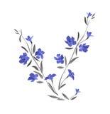 Niederlassung von wilden blauen Blumen auf einem weißen Hintergrund watercolor Stockbild