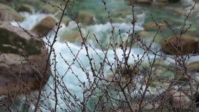 Niederlassungen auf dem Fluss stock video footage