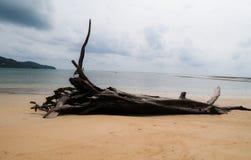 Niederlassungen auf dem Strand von Nai Yang Beach, Nationalpark Sirinath lizenzfreies stockbild