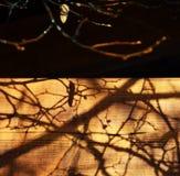 Niederlassungen beschatten auf dem Holz nach Autumn Rain Lizenzfreie Stockfotos