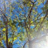 Niederlassungen, Blätter auf einem Hintergrund des blauen Himmels und Sonnenschein Lizenzfreie Stockfotografie