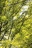 Niederlassungen, Blätter, Sonnenschein und Schatten Stockfotos