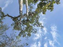 Niederlassungen der Bäume lizenzfreie stockfotos