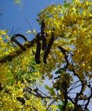Niederlassungen der Bereinigungskassie - gelbe Blumen Lizenzfreies Stockfoto
