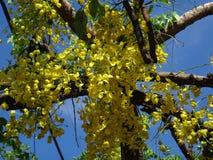 Niederlassungen der Bereinigungskassie - gelbe Blumen Stockbilder