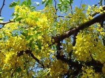 Niederlassungen der Bereinigungskassie - gelbe Blumen Lizenzfreie Stockfotografie