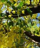 Niederlassungen der Bereinigungskassie - gelbe Blumen Lizenzfreie Stockbilder