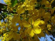 Niederlassungen der Bereinigungskassie - gelbe Blumen Stockfotos