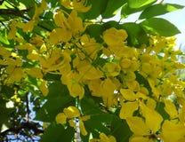 Niederlassungen der Bereinigungskassie - gelbe Blumen Lizenzfreies Stockbild