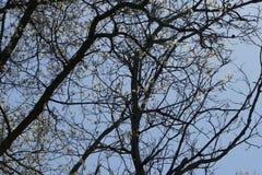 Niederlassungen der Eiche mit Blumen Stockbild