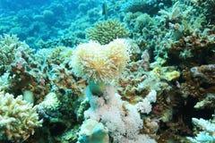 Niederlassungen der Koralle Lizenzfreies Stockfoto